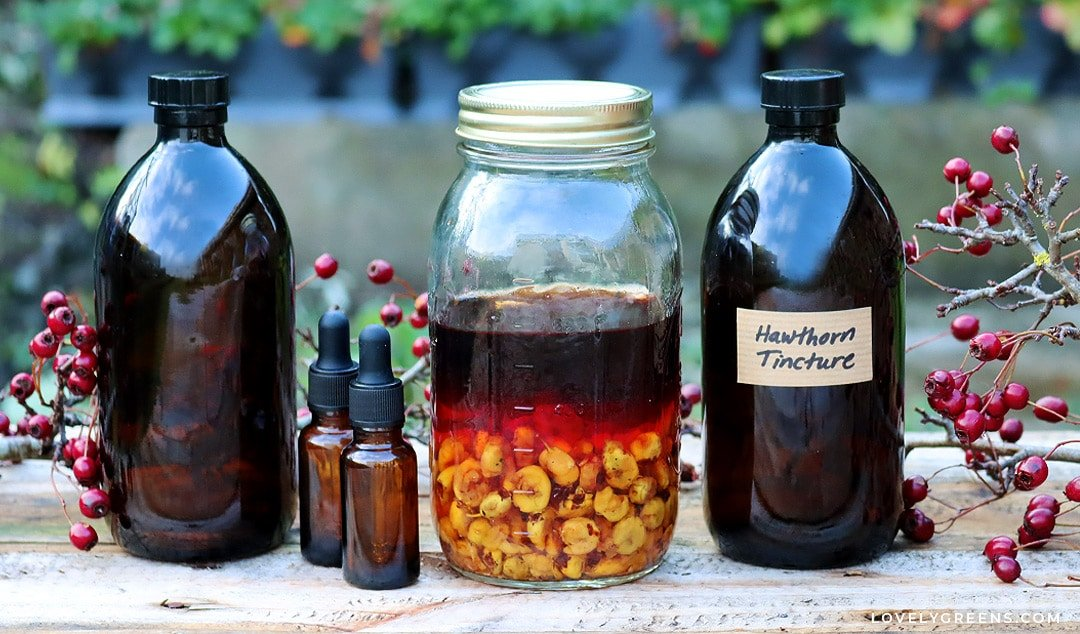 How to make Hawthorn Tincture