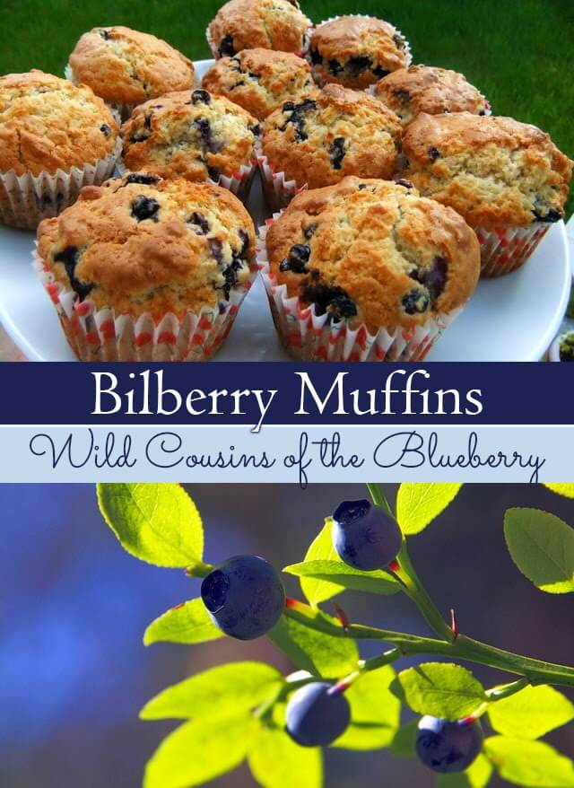Blueberry (or Bilberry) Muffin recipe