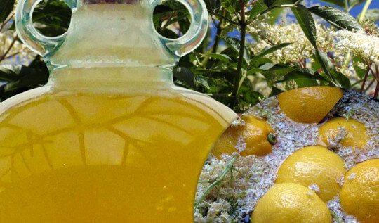 Elderflower Champagne: Pick Elderflowers in early summer to make this sweet sparkling wine