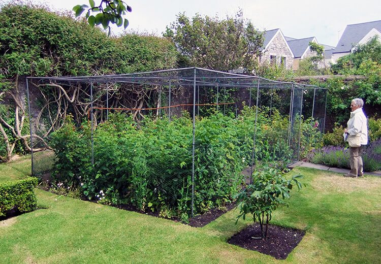 Fruit cage - The Port St Mary Allotment and the Hidden Gardens of Castletown