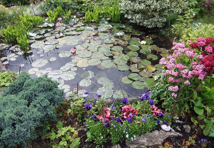 Netted pond with lily pads - Hidden Gardens of Castletown