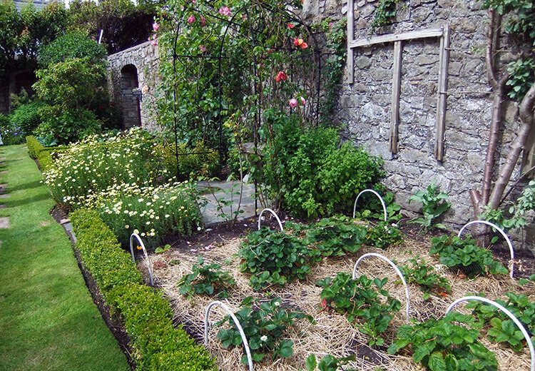 Walled garden - The Port St Mary Allotment and the Hidden Gardens of Castletown