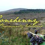 A Walk around Conrhenny Community Woodland