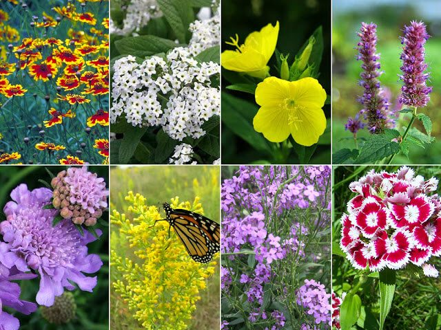 Create a wildflower meadow - a haven for wildlife and beneficial insects #wildflowers