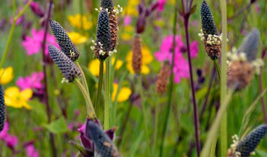 How to create a wildflower meadow - a haven for wildlife and beneficial insects #wildflowers