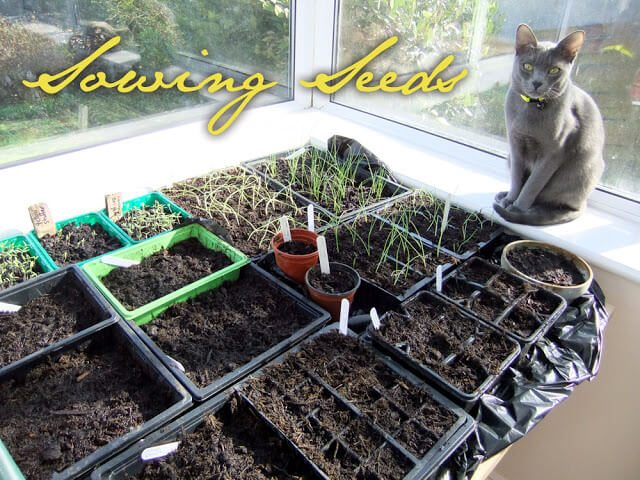 Early March Sowings