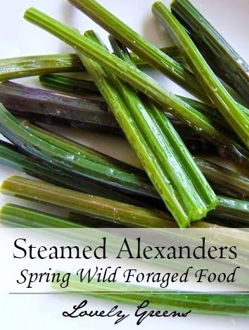Forage for and prepare Alexanders, a wild food found near the seaside in early spring. Pick the tender young stems and steam them for a unique flavour experience #wildfood #lovelygreens #foraging