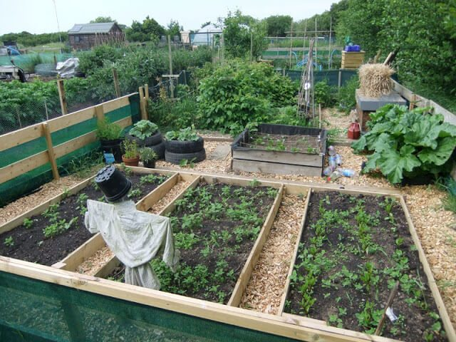 Tips for Starting a new Vegetable Garden in the Fall