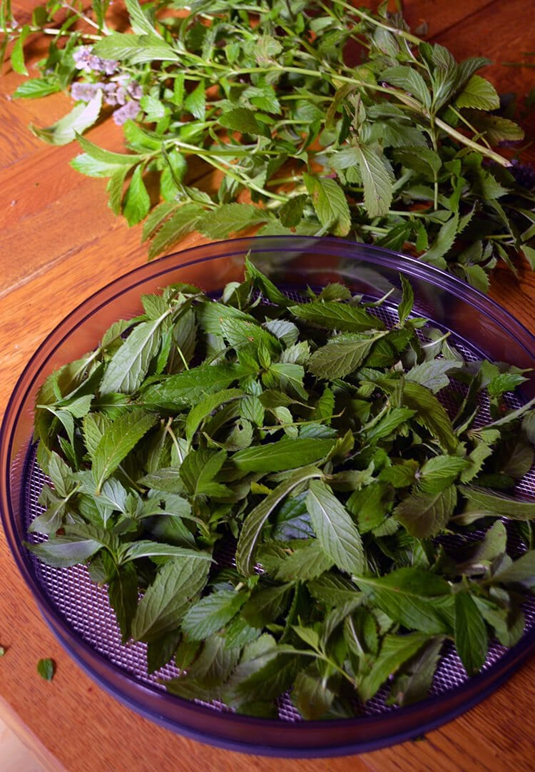 How to harvest and dry Peppermint for teas, beauty products, and food seasoning. Instructions for both drying in the oven and in a food dehydrator.