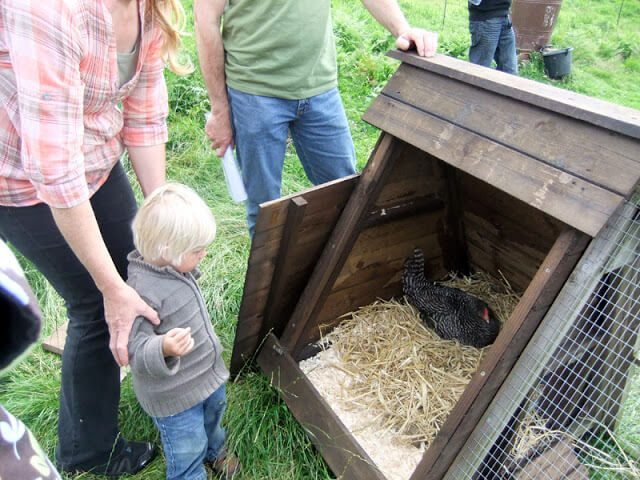 Chicken Sitting On Eggs: A Permaculture Farm On The Isle Of Man • Lovely Greens