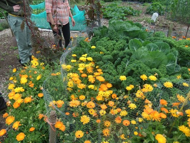 Sacrificial crops, Composting Loo, Wwoofing, and Bocking 14...intrigued? See this visit to a Permaculture homestead and learn what they have got to do with gardening! Low Impact Living - life on a Permaculture Homestead #gardening