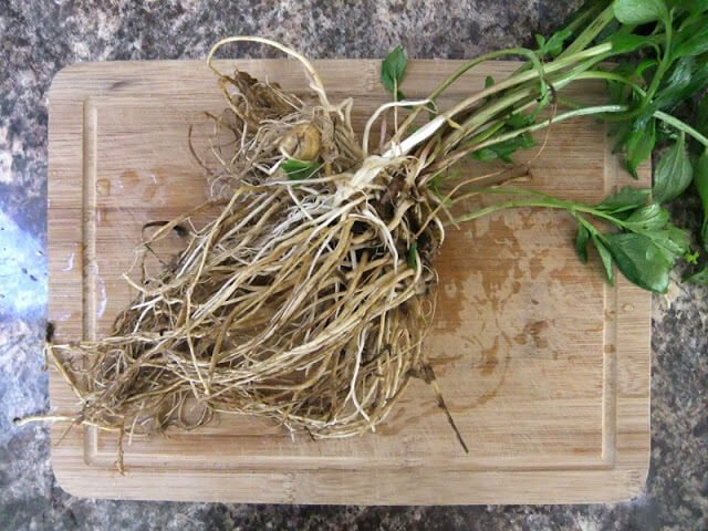 Grow Valerian as a Natural Sleep Aid #herbalmedicine #herbs