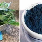 Extracting Woad…a Natural Blue Pigment