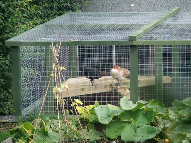 The Hens Get a Sun Deck