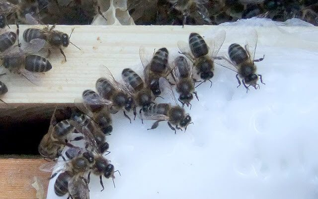 Feeding Bees in Winter + Early Spring Hive Inspection -- tips on how a beekeeper can feed bees in the winter if their honey stores are low. Includes recipes for fondant and instructions on how to feed it to honeybees