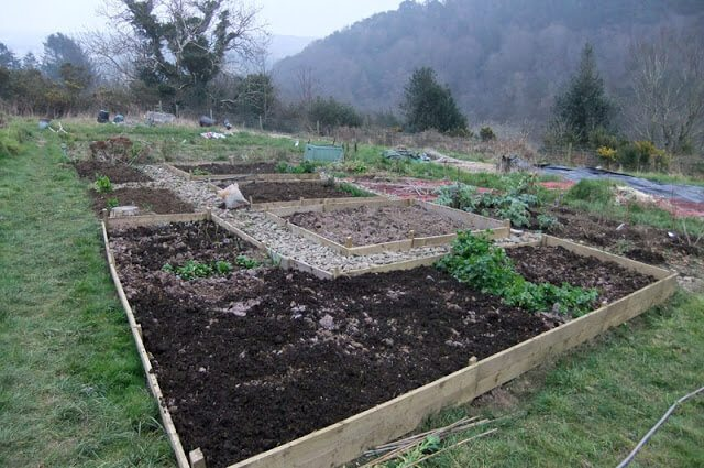 Allotment Progress – Planting Blueberries and a Row of Asparagus
