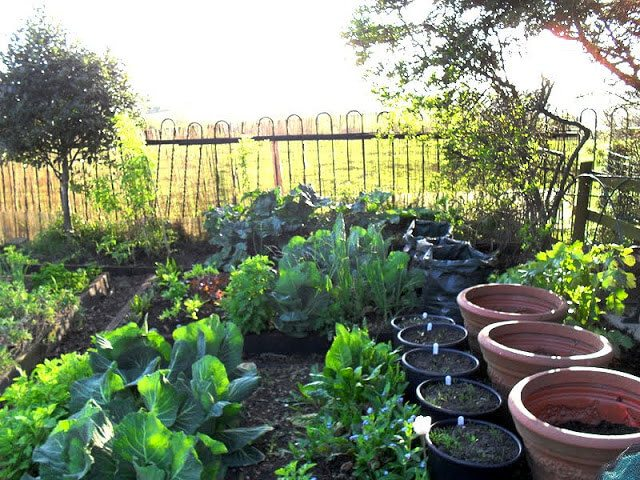Gardening on Budget - tips on how to save money and increase yields of homegrown veggies