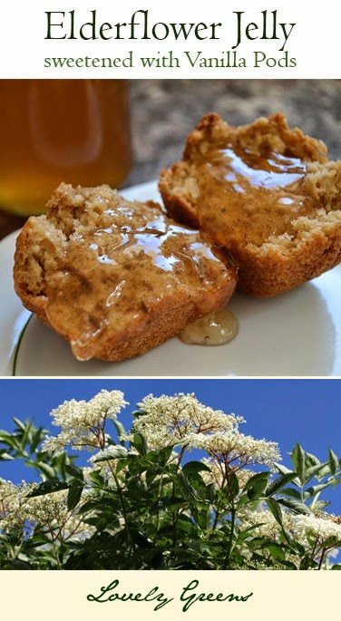 Recipe for Elderflower and Vanilla Jelly - a delicate topping for toast, cakes, and desserts #lovelygreens #foraging #elder #elderflower #jellyrecipe