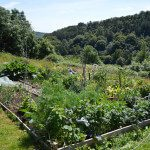 The Allotment in July