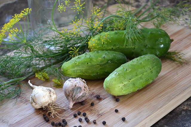 Grandma's recipe for crunchy Dill Pickles. Using fresh cucumbers, dill, spices, and brine, this flexible recipe follows a simple hot water bath method #lovelygreens #canning #preserving #dillpickles #preservetheharvest #gardenrecipe #kitchengarden #hotwaterbath #cucumberrecipe