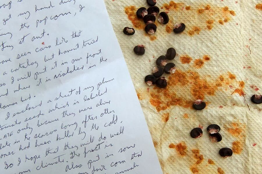 Tips on how to easily save tomato seeds on paper towels and then replant them the following year