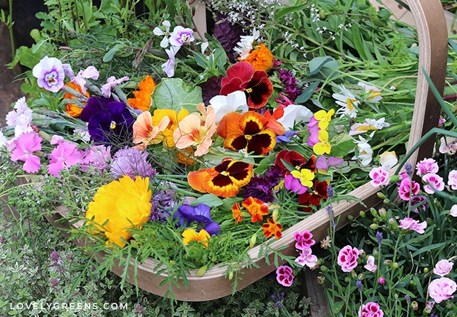 Unique vegetables to grow in this year's garden including vegetables from around the world, edible flowers and weeds, plants that produce food for years, and unexpected crops #vegetablegarden #gardeningtips #growyourownfood