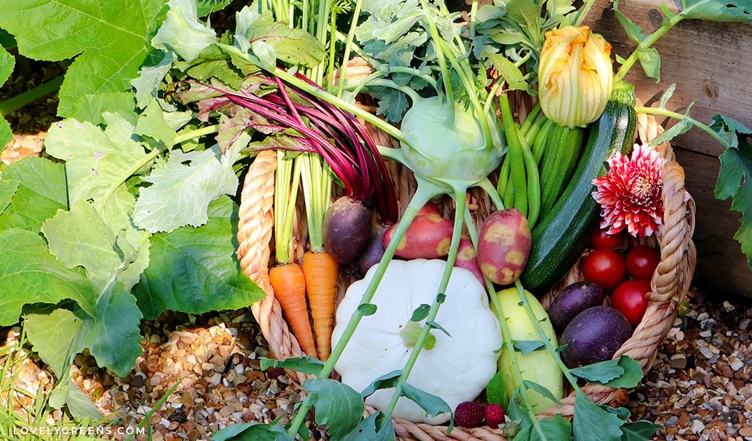 Unexpected Crops and Unique Vegetables for your Garden