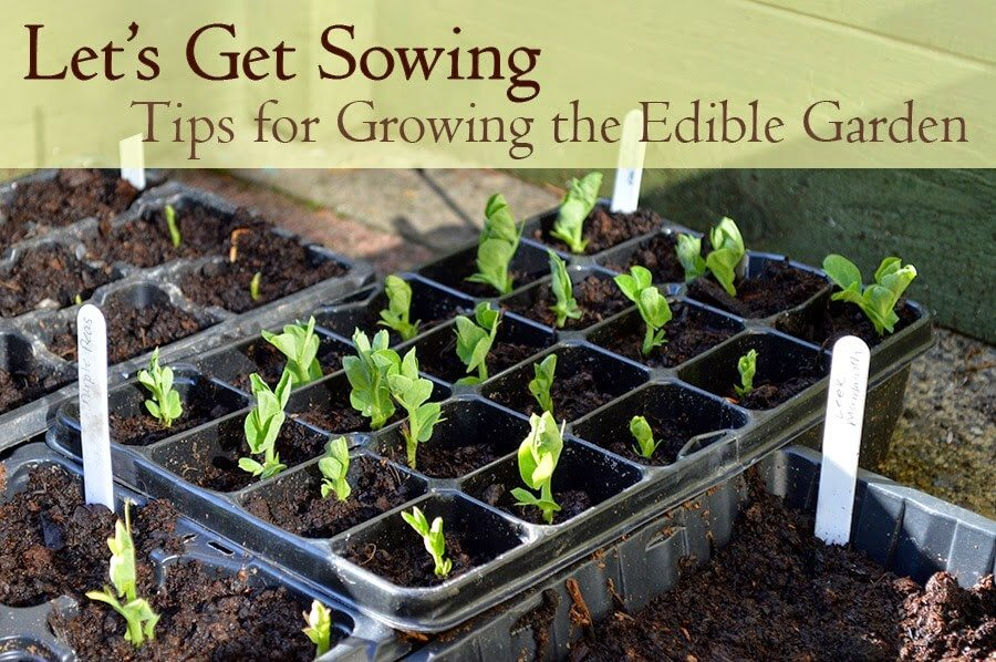 Let 39 s get sowing tips for growing the edible garden - Tips for a lovely garden ...