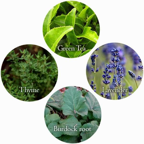 Growing a Beauty Products Garden: Plants, Flowers, & Herbs that are healing and beneficial for skin! #beauty
