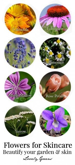 Growing a Beauty Products Garden: Plants, flowers, and herbs that are healing and beneficial for skin