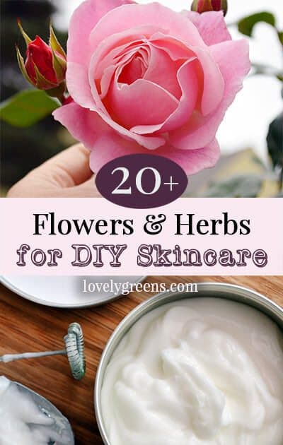 Growing a Beauty Products Garden: 20+ Flowers, and herbs that heal and benefit the skin