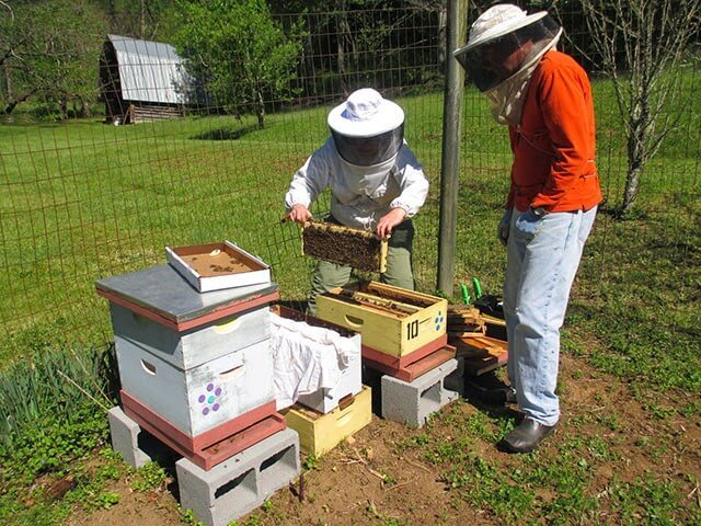 Learn how to get started keeping bees in this excellent introduction by beekeeper Linda Tillman of 'Linda's Bees'