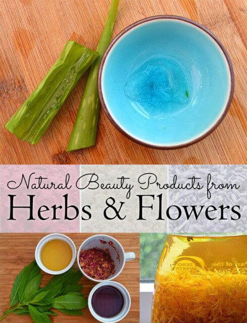 How to use homegrown plants and flowers to make beauty products. Focuses on how to use them fresh, dried, as water infusions, and infused into oils for creams and lotions #lovelygreens #herbalism #skincare #diybeauty #herbs