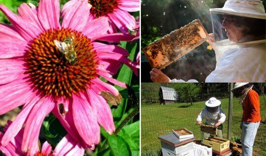 Advice on getting started keeping honeybees