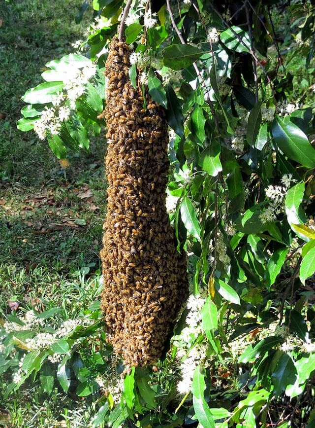 Learn how to get started keeping bees in this excellent introduction by master beekeeper Linda Tillman of 'Linda's Bees'