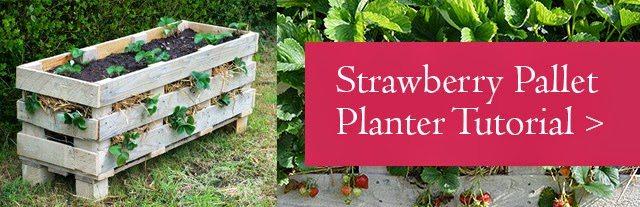 Strawberry Pallet Planter Tutorial