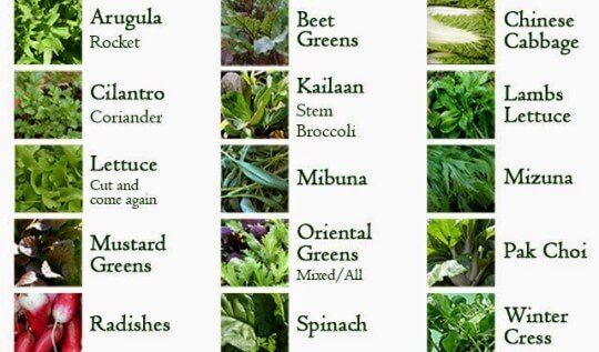 15 vegetables you can grow in autumn in the garden or containers gardening - Fall landscaping ideas a mosaic of colors shapes and scents ...