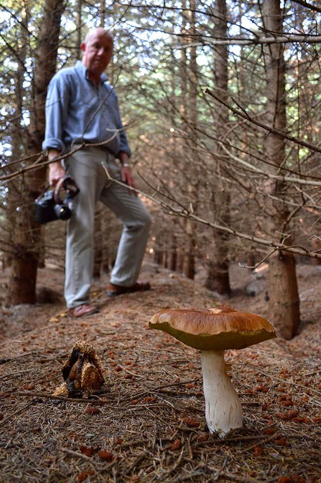 Foraging for Ceps, also called Porcini, on the Isle of Man #mushrooms