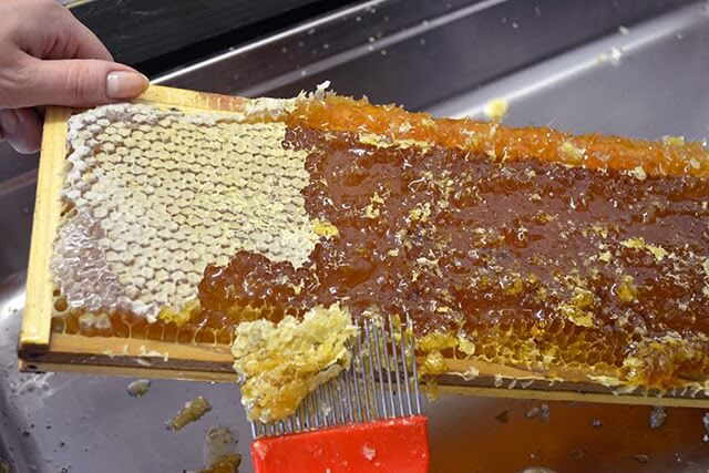 Extracting this Year's Honey from the Comb ~ Lovely Greens #beekeeping #honey