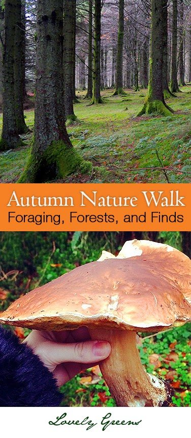 An Autumn Nature Walk on the Isle of Man #nature