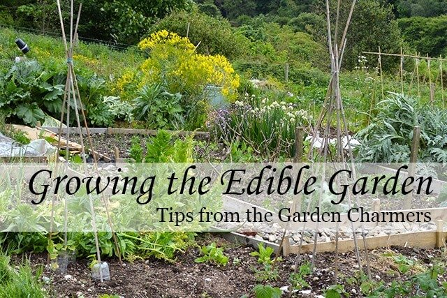 Tips for growing the Edible Garden - planning, sowing, growing, and harvesting from your Kitchen Garden #kitchengarden