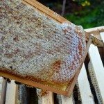 January Hive Inspection