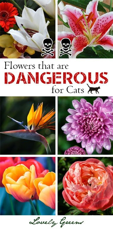 Something people are surprised to find out about you page 4 the student room - Toxic plants for dogs and cats the danger behind flowers ...