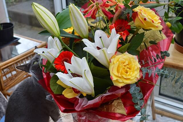 Bouquet Flowers that are Toxic for Cats