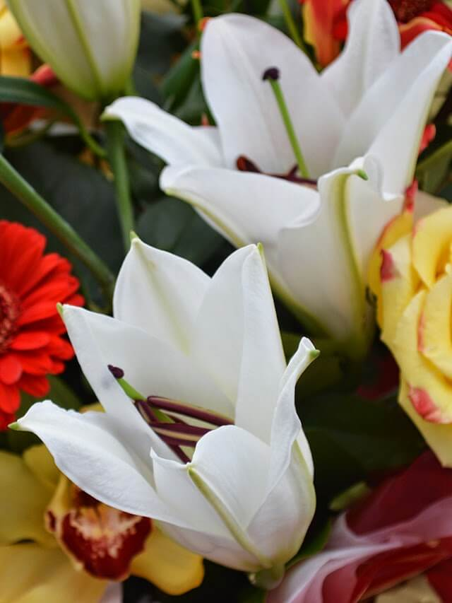 Bouquet Flowers that are Toxic for Cats - Garden Living ... Lily Poison