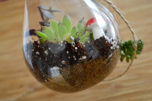 how to grow succulents in a terrarium