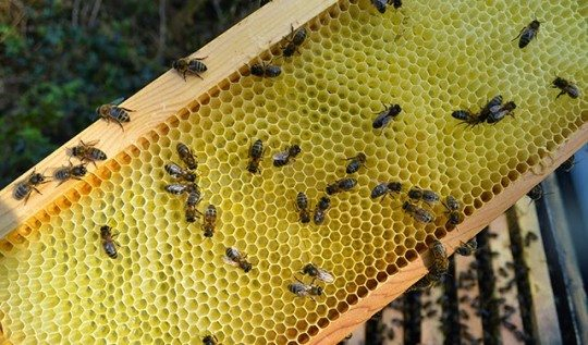 The Honeybees in April - early honeycomb and preparing for the honeyflow #beekeeping