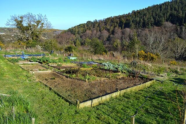 The Allotment in April - planting potatoes, digging weeds, and preparing the plot for a few weeks of neglect #garden