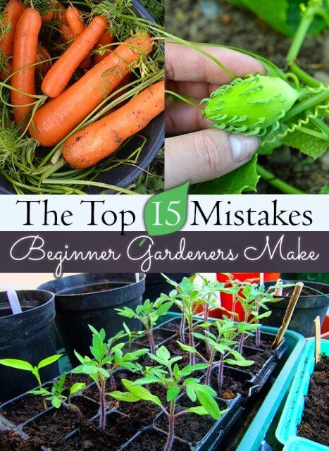 Save yourself time and effort by avoiding these 15 common gardening mistakes. Includes tips on spending, what to grow, and when to grow it #vegetablegarden #startagarden