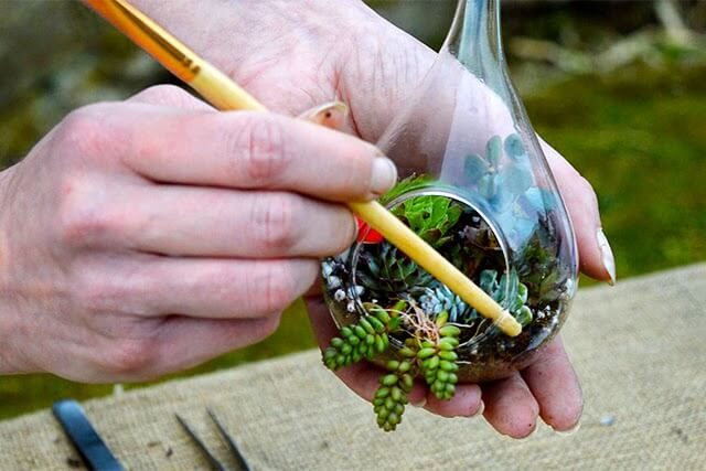 How To Make A Succulent Terrarium Lovely Greens